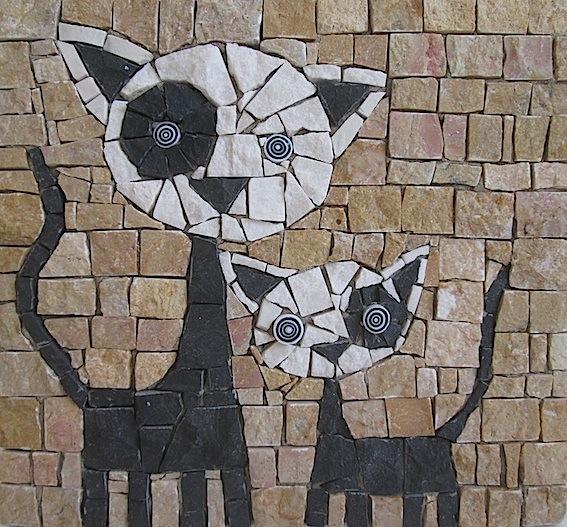 Gattini bianchi e neri